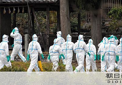 迫る危機、県内から豚が消える日 豚コレラで飼育数半減:朝日新聞デジタル