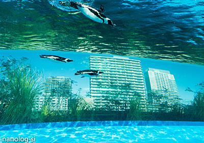 【サンシャイン水族館】天空のペンギンでフォトジェニックな写真撮ってきた | 恣意的なのログ