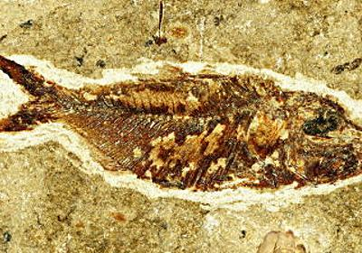 化石をわずか1日で作れる方法が見つかる - GIGAZINE