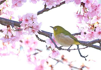 2018年の桜はいつもより大人な雰囲気で!優雅に楽しむ東京の「お花見イベント」6選 | Precious.jp(プレシャス)