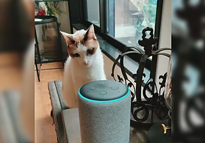 アレクサが家に来たが、猫さん的には『スピーカーが喋る』が解せないためこうなる「人の声と認識してるんだな」 - Togetter