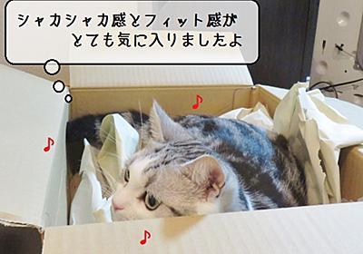 猫の道具 ~宅配便到着~ - 猫と雀と熱帯魚