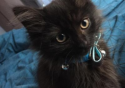 """🖤🎶🎧 ⚡️Thunder RK 🎡♥️🇺🇸 on Twitter: """"Black cats were created so everyone can experience being around a mini panther #BlackCatAppreciationDay https://t.co/7WTgpl3iWl"""""""