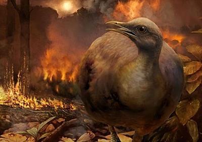 新説「恐竜絶滅」を生き延びたのは地上の鳥だった | ナショナルジオグラフィック日本版サイト