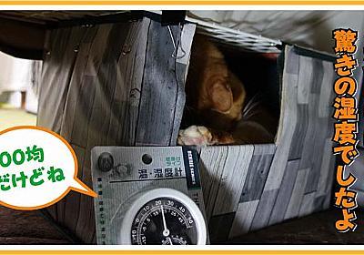 猫が引きこもっているコタツの中の湿度を計測 | ヒヨリどんの猫日和II