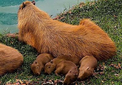 ほのぼのしたいときは見るべき…愛情あふれる動物親子の写真23:らばQ