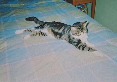 行方不明の猫が13年後に見つかる…再会した飼い主を覚えていた:らばQ