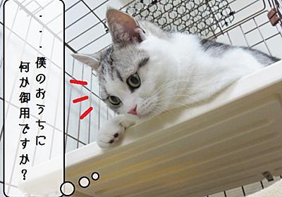 猫の道具 ~むくのケージ~ - 猫と雀と熱帯魚