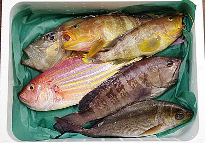 何が届くかわからない生魚ガチャ! 産地直送の「お任せ鮮魚セット」を余すことなく楽しむ方法 - ソレドコ