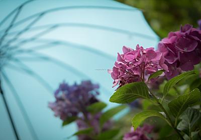 今年は○○○と一緒に。紫陽花と一緒に写真に残したい「モノ」「場所」   キナリノ