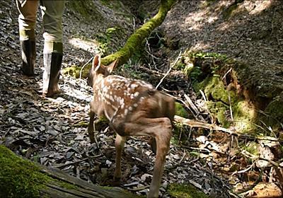 ずっとついてくる小鹿と水源探し - ゾンビの部活動