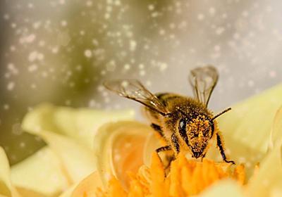 ミツバチの毒に含まれる分子が乳がん細胞を破壊することが実験により実証される | VAIENCE