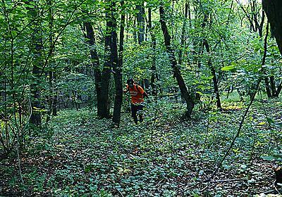 呪われた森に行ったら狙撃されそうになった話 :: デイリーポータルZ