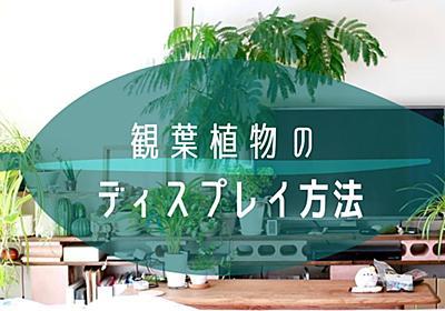 観葉植物、もっとお迎えしたいけど部屋のどこにどう置いたらいいの? 植物に囲まれて暮らす3人に聞いてみた #ソレドコ - ソレドコ