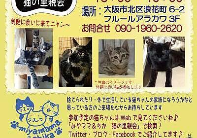 大阪公営住宅訴訟猫 ご報告6|犬猫(その他生き物)迷子・里親捜し&園芸