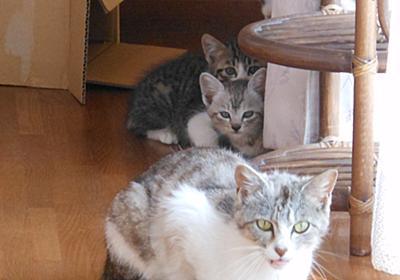 イクメン猫ダイちゃんと増える子猫 - やれることだけやってみる