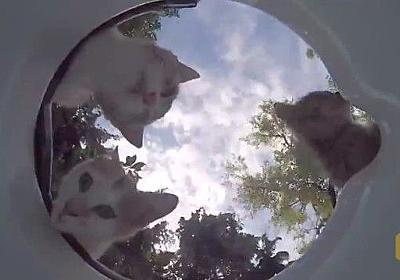 「ああ美味しい、生き返ったよ!」家の前に水飲み場を設置したら、いろんな動物がやってきた! : カラパイア