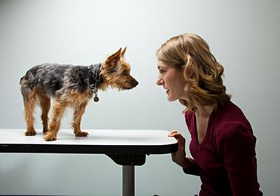 「犬の性格は飼い主に似る」は本当だった | ナショナルジオグラフィック日本版サイト