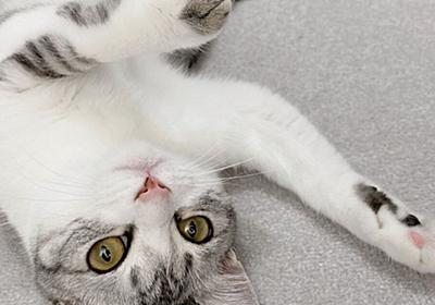 うちの猫、触り心地がやたらと柔らかいな…と獣医さんに相談したら『もちもちタイプ』と判明→猫さんのいろんな触り心地の話へ - Togetter