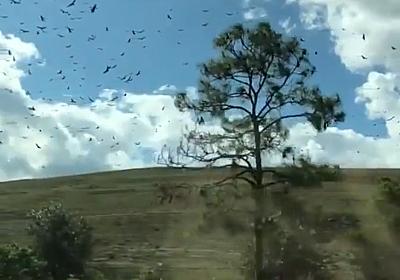 【動画】スローモーションで鳥を撮影したら、世界が止まったように見える… | ひよコスモ