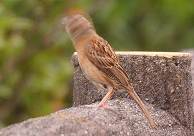 野鳥ぶれぶれ写真館 :: デイリーポータルZ