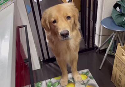 """『台所には入らない』普段は守る約束だけど、""""お友達""""の一大事に駆けつけずにいられなかった犬さん「ずっと側にいました」"""