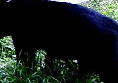 人を恐れない「新世代クマ」か 里山の奥山化、すぐ人里に 全国で襲撃相次ぐ - 毎日新聞