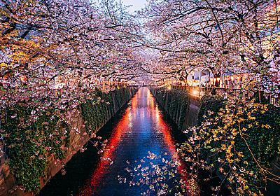 ★桜シーズンに人気の旅行先ランキング発表、東アジアは九州、東南アジアは北海道が人気 | やまとごころ.jp