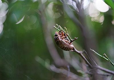 蝉の羽化 - 第二詩集のために