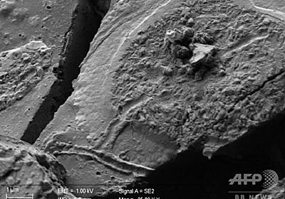 ベズビオ山噴火犠牲者から2000年前の脳細胞、保存状態は良好 写真5枚 国際ニュース:AFPBB News