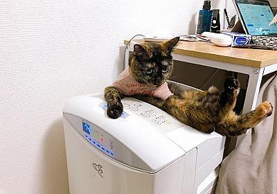 おちょーと空気清浄機。 - 【子猫】ちょこの育成記