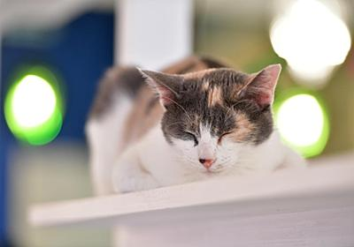 ネコも自分の名前が分かる 上智大の実験で判明 - 産経ニュース