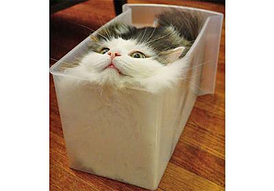 【猫パン焼けました!】透明な箱にみっちりと収まるニャンコさん。その姿は、まるで美味しそうな…♡ | PECO(ペコ)