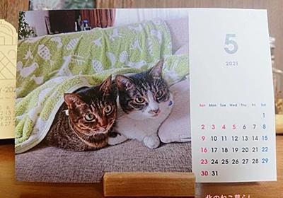 【GW突入】出勤しない飼い主に混乱する猫 - 北のねこ暮らし