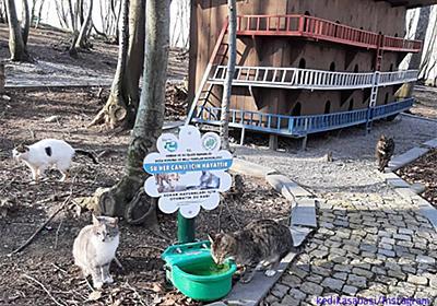 猫の国トルコには、ホームレス猫専用の素敵な宿泊施設が複数存在する : カラパイア