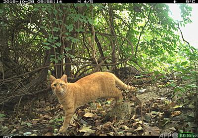 史上初、猫の生息数調査 米首都ワシントン