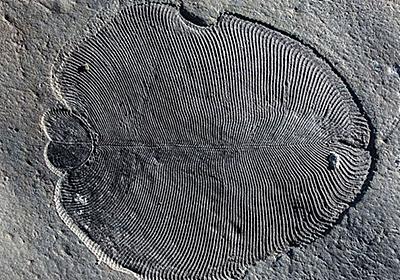 地球最古・5億5800万年前の生き物の痕跡が報告され、古生物学が追い求めてきた数十年来の謎が解明へ - GIGAZINE