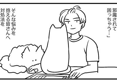 仕事を猫ちゃんに邪魔され困っている全国の猫飼いの皆さんに充てたアドバイスがこちらです「敗北を知ることも成長です」 - Togetter