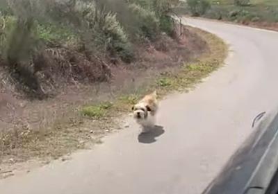 山に捨てられた犬、通りすがりの車を必死で追いかけ続け、新たなる家族を得る : カラパイア