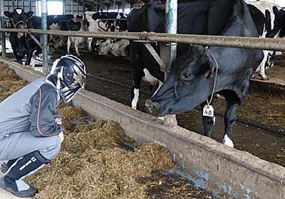 「搾りたての牛乳を飲むのは子牛と観光客だけ」:日経ビジネスオンライン