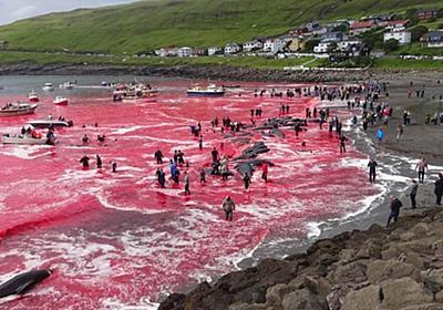 CNN.co.jp : クジラ漁の血で海が一面赤に、保護活動家から批判 フェロー諸島
