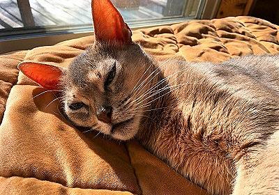 愛する猫のために冷凍包丁を買うのだ! - 人生万事ドーパミン!