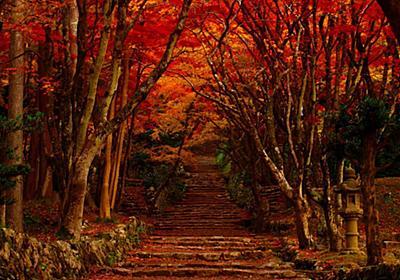日本の秋を代表する絶景。滋賀県「鶏足寺」の幻想的な秋の絶景をご紹介 | RETRIP[リトリップ]