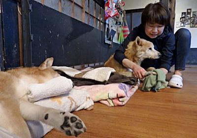 老いた愛犬 介護に限界 高齢飼い主、引き取り相談相次ぐ 老犬ホーム「寿命考え飼育慎重に」 :日本経済新聞