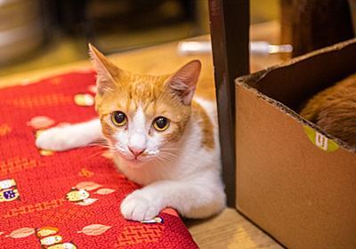 こんばんは、はるです。新橋の猫好きなおっちゃんたちが集まってくる「家庭料理てまり」で店番してます - メシ通 | ホットペッパーグルメ