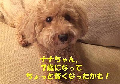 アピール上手になったナナちゃん - NANA`S  ROOM