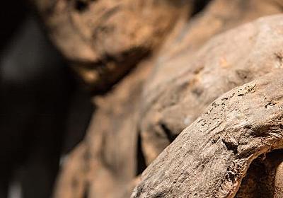 天然痘の起源に新説、ミイラのDNA分析で判明 | ナショナルジオグラフィック日本版サイト
