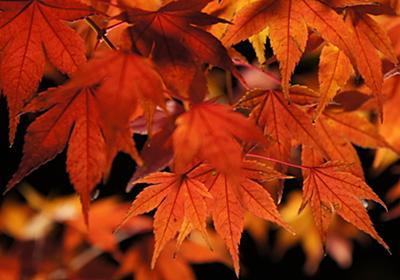 今まで行って良かった京都の紅葉スポット、個人的ランキング - 子連れで楽しむお出かけブログ