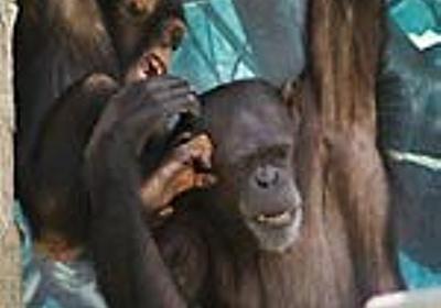 『孫文の義士団』 - Apes! Not Monkeys!  本館