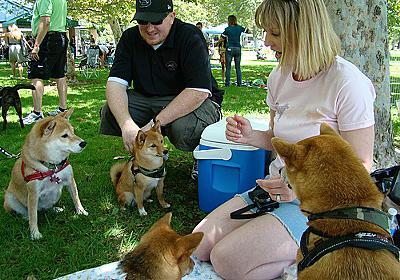 アメリカ人が称賛する「日本の柴犬を飼うべき27の理由」:らばQ